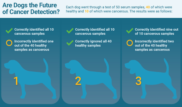 Mesothelioma In Dogs Life Expectancy
